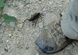 Insect Yankuam1b
