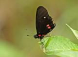 Butterfly-Rio-Bigal.jpg