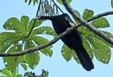 Common Piping-Guan