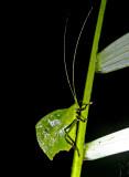 Bug Wildsumaco