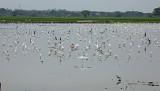 Egrets Relicario