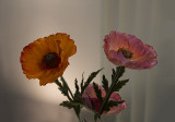 Luminous poppies - Amsterdam City Archive