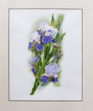 Irises by request