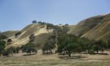 Golden hills (near King City)