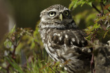Return to the Owl Centre