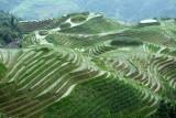 Longji Rice Terraces 龍脊梯田