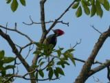 A BirdingTrip to Veracruz, Mexico