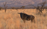 Sunset Black Rhino Preserve