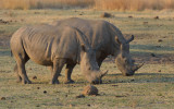 Breakfast at the Rhino Clearing
