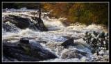 Falls of Dochart in Flood