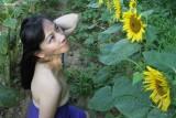 worshipping sunflowers 2013