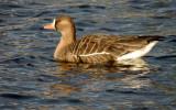 ducks_