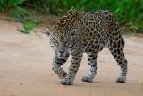 pantanal_2014