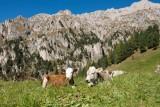 Südtirol - South Tyrol