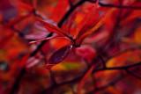 FallBlueberries_1.jpg
