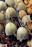 Mushrooms100613_1.jpg