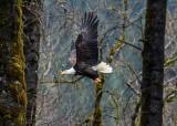 EagleFlight-122514.jpg
