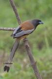 Kerala Birding Jan 2016