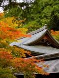 Kyoto Zen Shrine