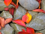 Texture of Japan, smooth stones and autumn leaves