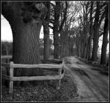 Bosrandweg
