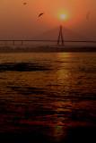 Sealink bandra, Mumbai_DSF6174.jpg