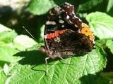 Papillon, St-Onésime-d'Ixworth