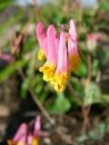 Fleurs, Baie-James