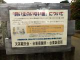 yanaka P1010074.jpg