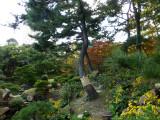shukkeien gardens P1010189.jpg