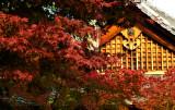 arashiyama P1010294.jpg