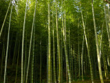 arashiyama P1010333.jpg