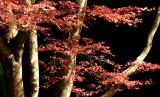 kirishima shrine P1010799.jpg
