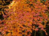 kirishima shrine P1010804.jpg