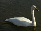 tafutsu swan park P1010986.jpg