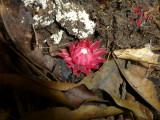 forest floor flower.jpg