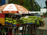 mango season.jpg