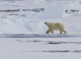 Spitsbergen (2014)