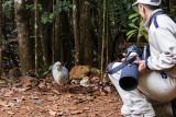 Kagu and David H, New Caledonia