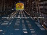 P1040527-Edit-Edit.jpg