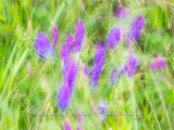 motion and abstracts-3.jpg