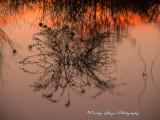 Twilight_On_The_Marsh.jpg