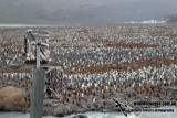 Remote camera on Penguin colony a8449.jpg