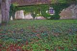 ivy yard-Chenonceau.jpg