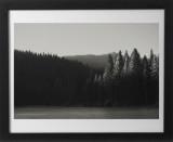 SequoiaForest3784