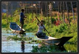 In the Floating Gardens. Inle lake.