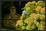 The Hydrangea and the old Fountain.
