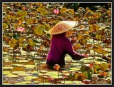 Cleaning the Lotus Pond - Ubud.