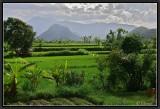 East Bali.