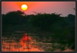 An Indian Sunset. Bharatpur.